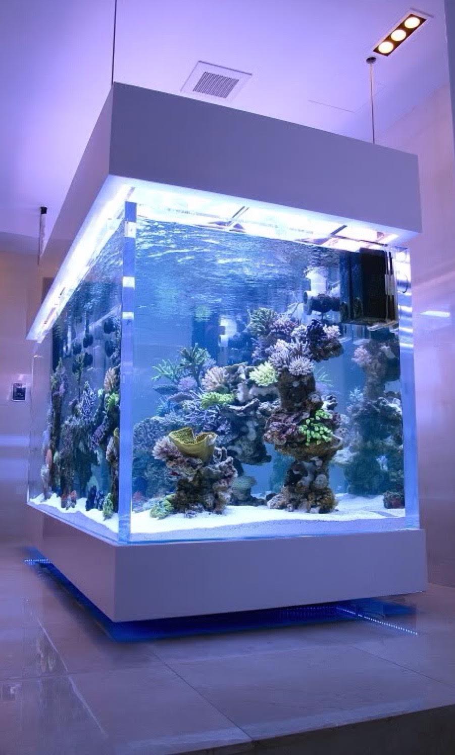 synergy_aquatics_11116